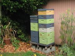 Beekeeping 2462