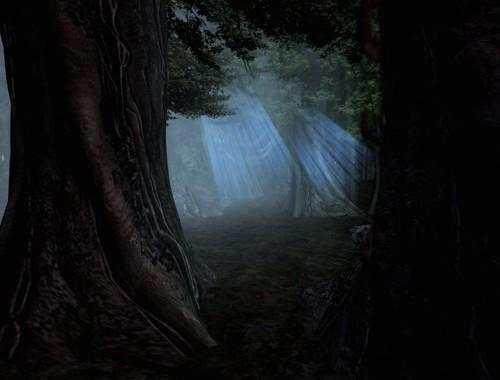 Bosque Callado