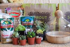 terrariums! (sgoralnick) Tags: birthday present terrarium succulents sprouthome