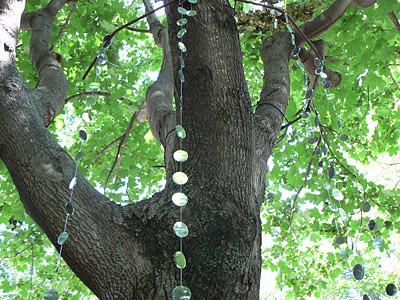 miroirs sur l'arbre.jpg