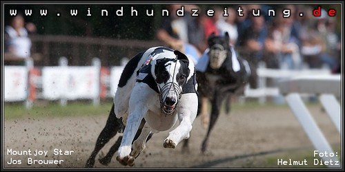 Greyhound Mountjoy Star, Jos Brouwer, NL