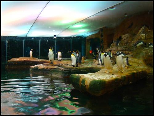 Selwo Marina Pingüinos