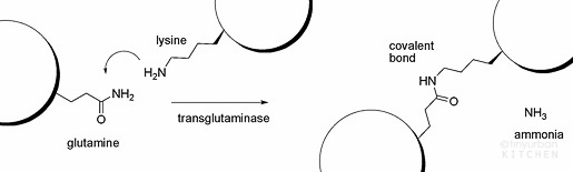 transglutaminaseReaction-1