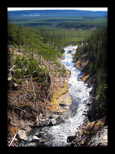 yellowstone- the aftermath