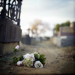Already it is Dusk (memetic) Tags: flowers 120 6x6 cemetery mediumformat death solitude carlton kodak tl cemetary melbourne forgotten discarded e100vs pentaconsix