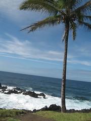 Day9: Maui - Road to Hana - Nihue (Amudha Irudayam) Tags: tree beach hawaii coconut maui hana amu amudha nihue