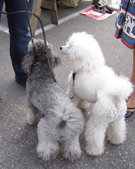 dogs (Anna Amnell) Tags: dog dogs koirat villakoira