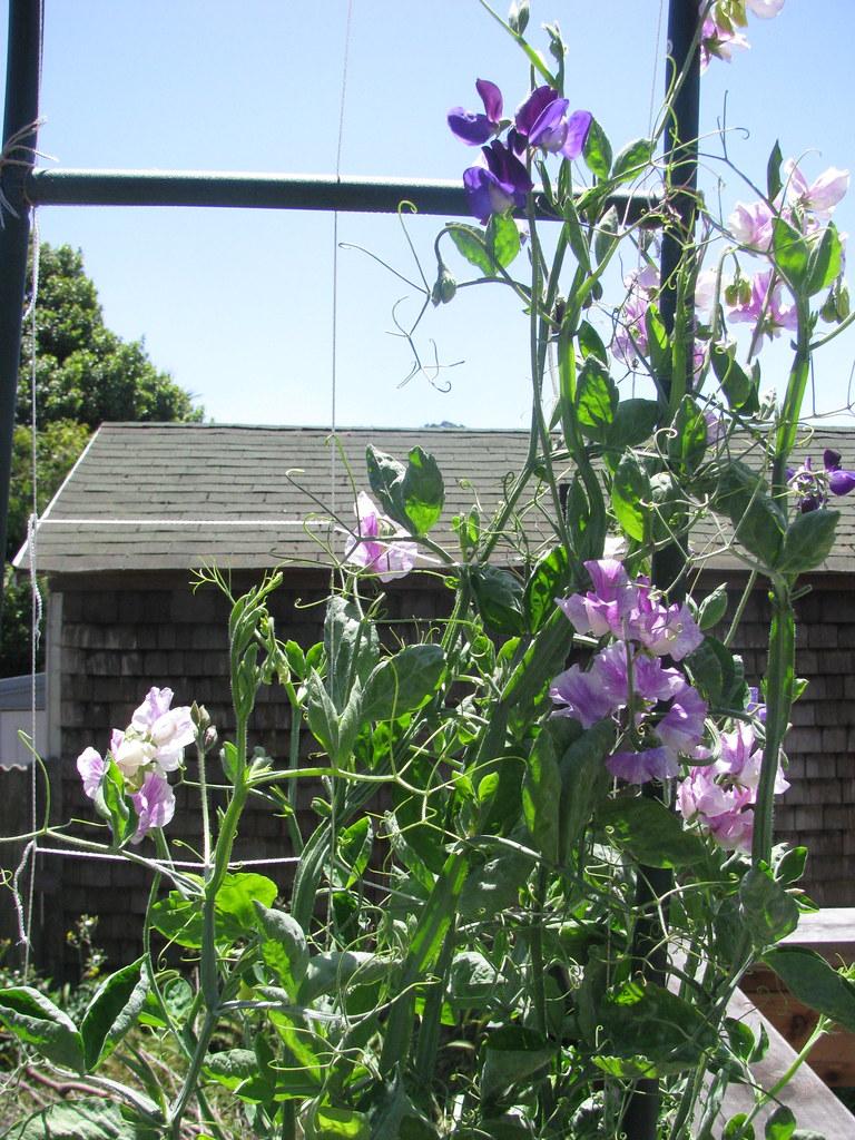 garden update, June 2010