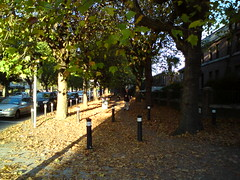Grifith Avenue (eyair) Tags: autumn ireland dublin fall leaves leaf ashmashashmash