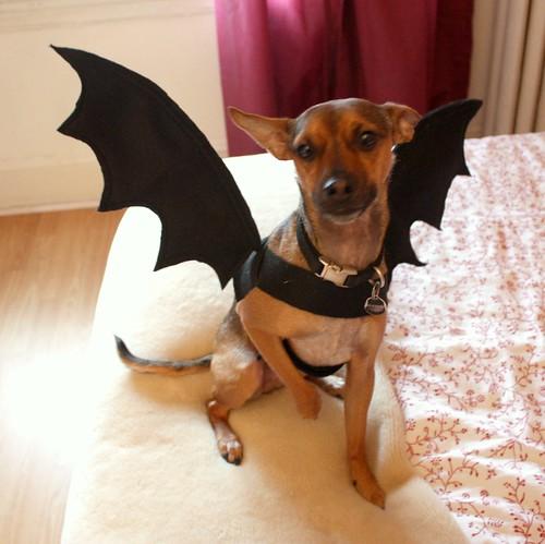 dog-bat-costume