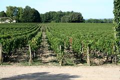Bordeaux: Chateau Smith Haut Lafitte - Day One (Megan Lawrie Cole) Tags: france vineyard vines wine bordeaux grapes winetour lessourcesdecaudalie chateausmithhautlafitte