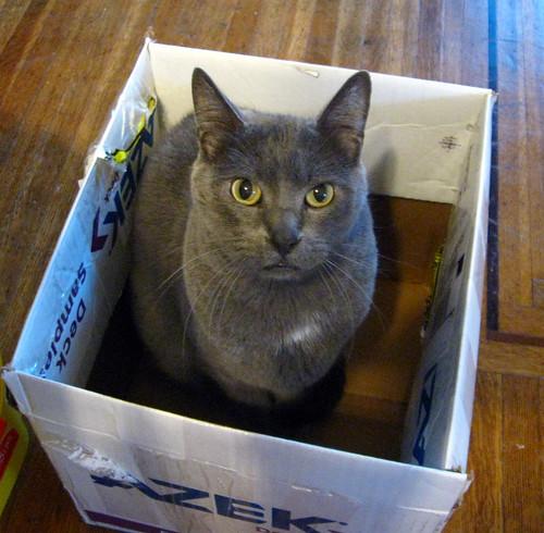 Wyatt in a box