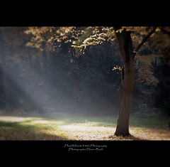 . ..animalism.. . (oliver's | photography) Tags: trees friends shadow sun nature leaves photoshop canon germany eos flickr raw oliver image  hannover 100mm adobe frame dslr f28 sunbeams copyrighted digitalcameraclub pixelwork totalphoto canoneos50d flickraward adobephotoshoplightroom gnneniyisithebestofday flickrlovers photographersgonewild thelightpainterssociety doubledragonawards oneofmypics flickraward oliverhoell theacademytreealley photographeroliverhoell allphotoscopyrighted