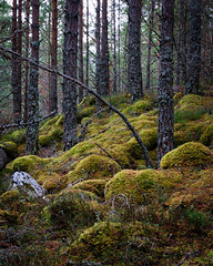 """Rothiemurchus Forest II • <a style=""""font-size:0.8em;"""" href=""""http://www.flickr.com/photos/26440756@N06/5156063202/"""" target=""""_blank"""">View on Flickr</a>"""