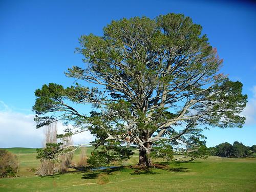 Hobbiton's tree
