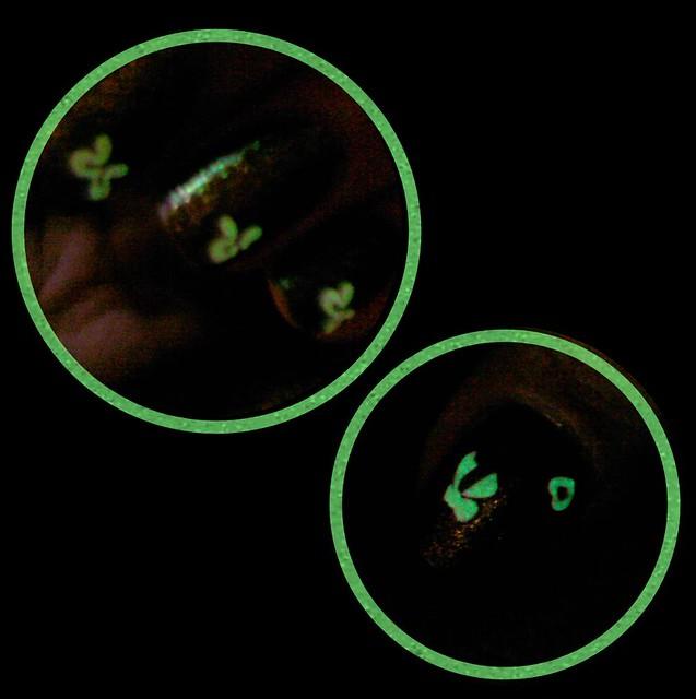 http://farm2.static.flickr.com/1324/5169721663_2c1c438db7_z.jpg