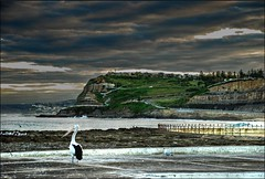 Pelican waiting.. (Earlette) Tags: sea seagulls beach water birds clouds photoshop newcastle chains nikon surf australia pelican nsw surfers hdr headland d80 earlette
