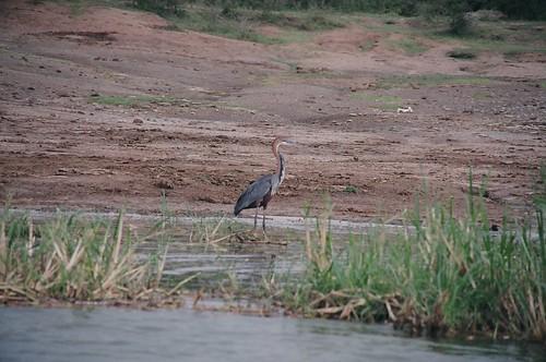 Uganda - QENP Rich Bird Life 8