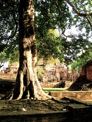 Ayuttahya_with_Ben_and_Mon - 212