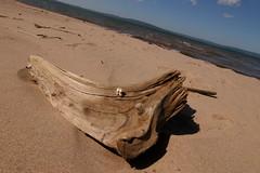 driftwood + vertebrae (fotofrenzy) Tags: apostles
