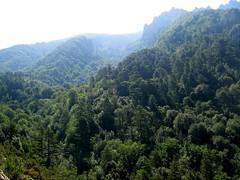 Le ravin de Coracchia (partie basse): à gauche, le ravin du torrent que l'on traverse dans le contournement