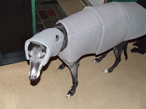 Imperial Walker (AT-AT) Dog Costume