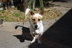 大東犬 画像2