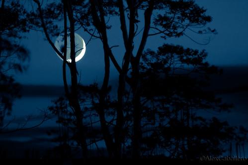 ...pero la luna es mía by Alex Caballero.