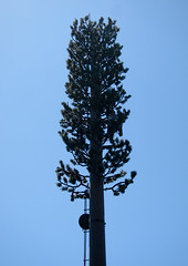 Cell Tower Tree