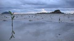 Lokawi Beach 16 (alienfart) Tags: beach island kinarut putatan lokawi