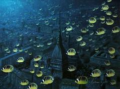 Panorama con pesci gialli