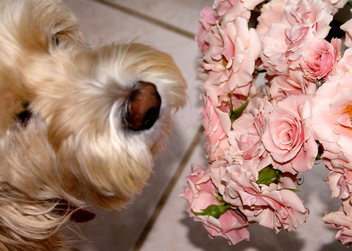 taking time to smell the roses