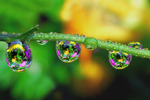 How to put pretty stuff in those drops. by Steve took it, on Flickr