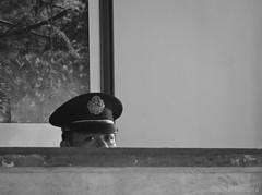 head guard (jobarracuda) Tags: lumix securityguard guard bantay panasoniclumix dmcfz50 jobarracuda flickristasindioslamesaecopark