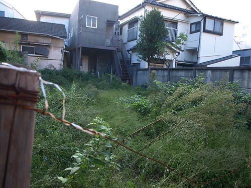 overgrown weeds garden