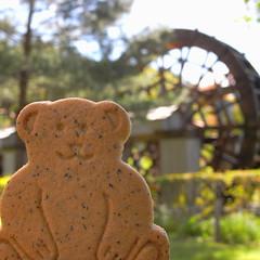 bear biscuit (kotechin) Tags: bear park lake biscuit yamanaka hanabatake