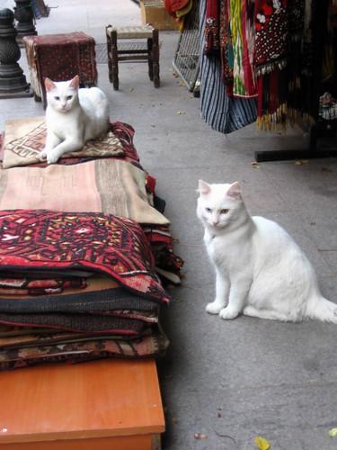 in sultanahmet