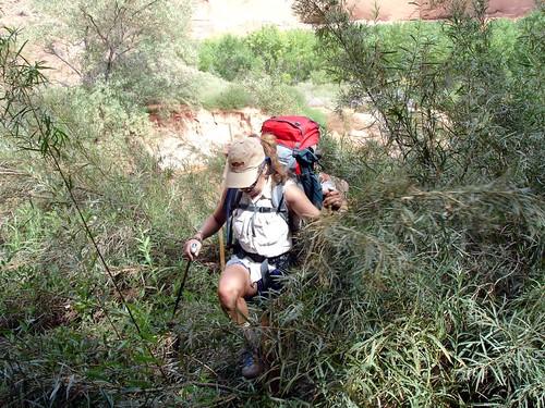 Bushwacking along the Escalante River
