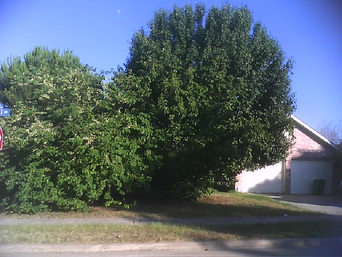 Crazy overgrown trees
