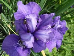 face to face (dmixo6) Tags: summer canada june garden lawn shield muskoka dmixo6