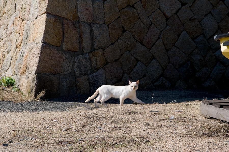 ネコ|女木島