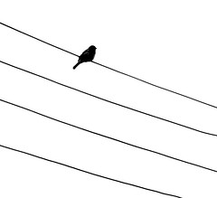 Partitura: Samba de uma nota só... **** EXPLORE **** (Marina Linhares) Tags: bird nature natureza pássaro partitura superaplus aplusphoto astic nikond3000 dblringexcellence