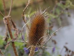 park plant toronto ontario canada macro thing etobicoke smythe