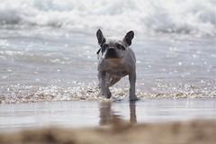 bat (marlene*) Tags: beach spain frenchbulldog travelogue calblanque