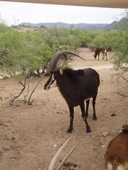 Antelope (sundog02) Tags: arizona sedona sundog