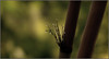 Morning in Pelling (Sukanto Debnath) Tags: morning india macro rain droplets searchthebest bokeh dew bambooshoots sikkim pelling debnath mywinner abigfave sukanto