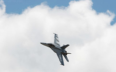 Roaring Hornet (3)