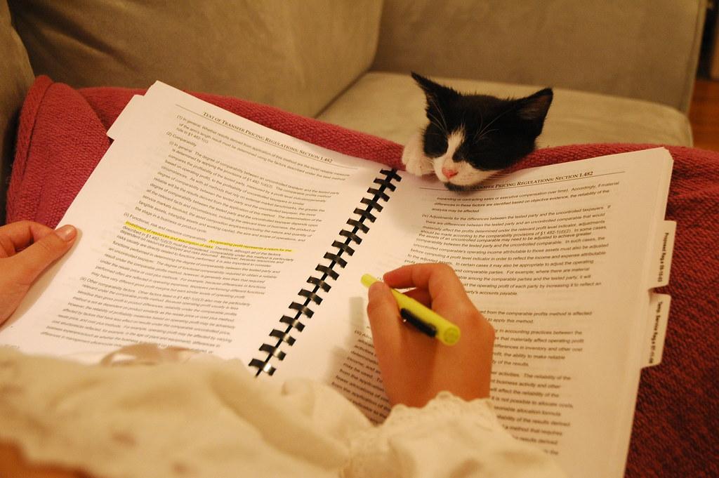 妈妈,我也要学习! - 艾小柯 - 四处游荡的艾小柯