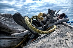 daydreaming (brainburger) Tags: ocean sea beach rope driftwood salty pugetsound discoverypark anawesomeshot