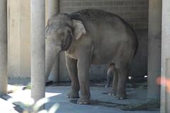 How You Doing.!! (saldous) Tags: elephant oregon penis zoo nikon d70 70300mmf456g portlnad